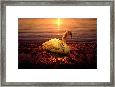 Swan Lake Framed Print by Yuri Lev