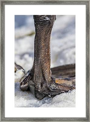 Framed Print featuring the photograph Swan Leg by Paul Freidlund