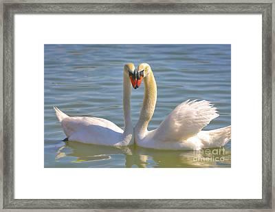Swan Love Framed Print by Carol Groenen