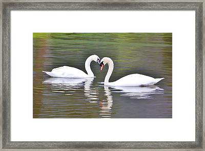 Swan Love Framed Print by Diane Alexander