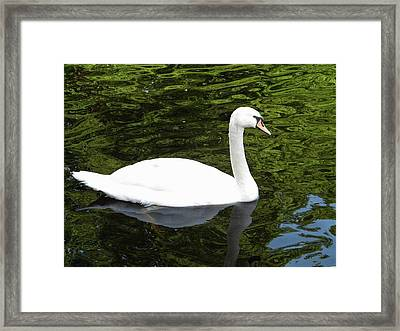 Framed Print featuring the photograph Swan by Manuela Constantin