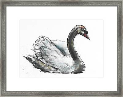 Swan Framed Print by Mark Adlington