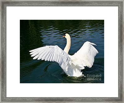 Swan Moment Framed Print