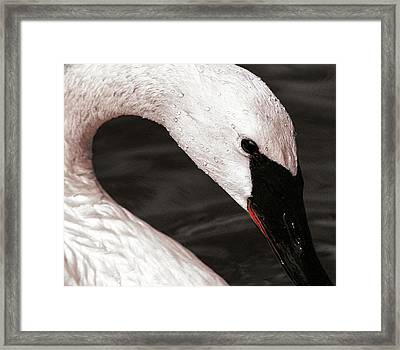 Swan Neck Framed Print by Jean Noren