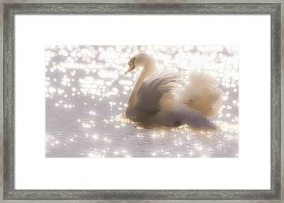 Swan Of The Glittery Early Evening Framed Print