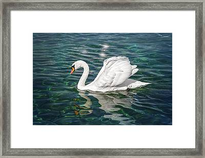 Swan On Lake Geneva Switzerland  Framed Print