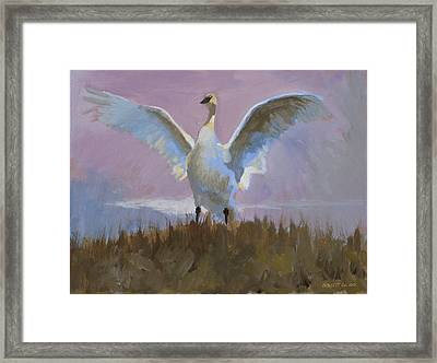 Swan Framed Print by Robert Bissett