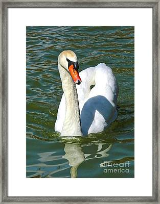Swan Swirls Framed Print