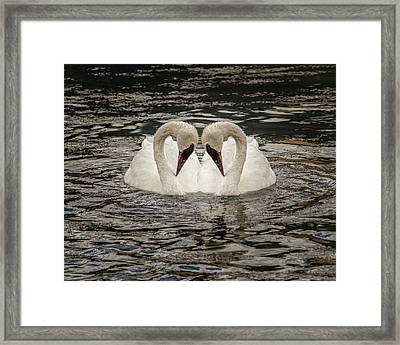 Framed Print featuring the photograph Swan Times Two by Mary Hone
