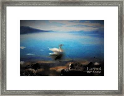 Swan Tranquility Framed Print by Alex Thomas