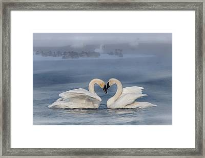 Swan Valentine - Blue Framed Print by Patti Deters