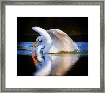 Swanlike Framed Print