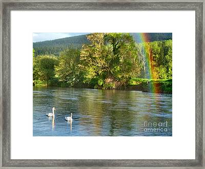 Swans And Double Rainbow 1 Framed Print by Debra Collins