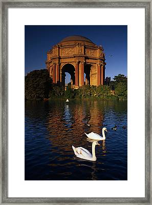 Swans And Palace Of Fine Arts Framed Print