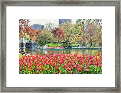 Swans And Tulips 2 Framed Print