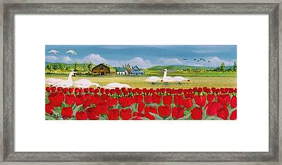 Swans And Tulips Framed Print by Bob Patterson