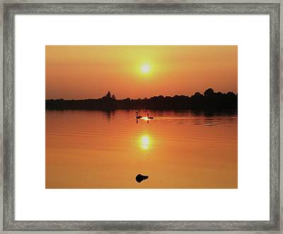 Swans At Sunset  Framed Print by Martina Fagan