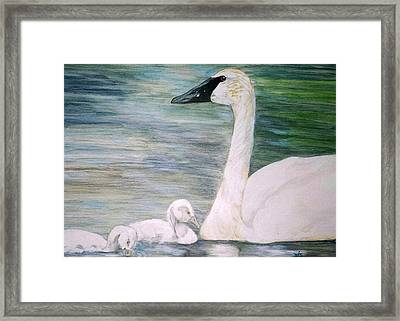 Swans Framed Print by Debra Sandstrom