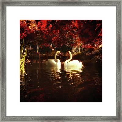 Swans In A Pond Framed Print