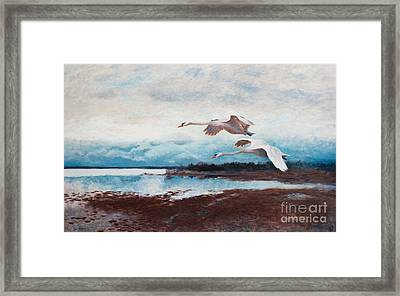 Swans In Flight Framed Print by MotionAge Designs