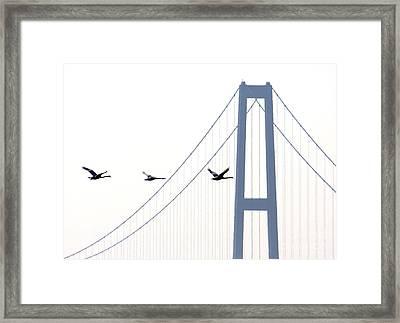 Swans In Line Framed Print by Toon De Zwart