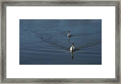 Swans On Blue Framed Print by Charles Kraus