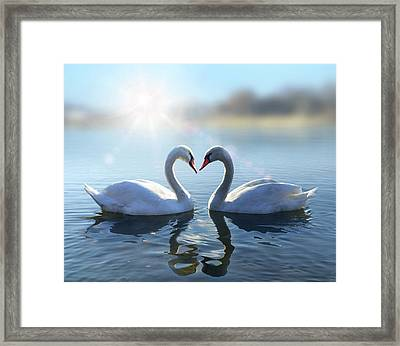 Swans On Blue Lake Water In Sunny Day Framed Print