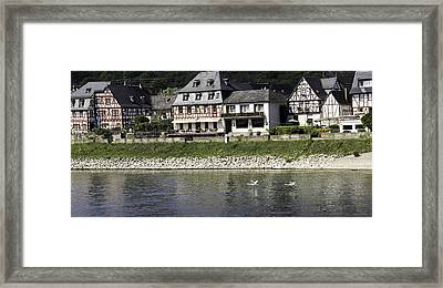 Swans On The Rhine In Spay Germany Framed Print by Teresa Mucha