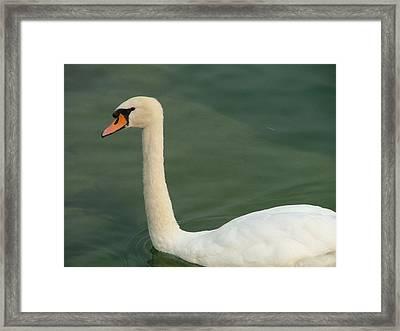 Swan's Portrait Framed Print by Rita Fetisov