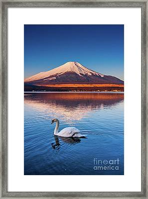 Framed Print featuring the photograph Swany by Tatsuya Atarashi