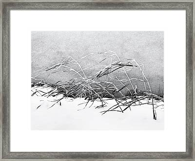 Sway Framed Print by Karen Stahlros