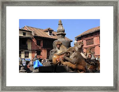 Swayambhunath Temple Monkeys Framed Print
