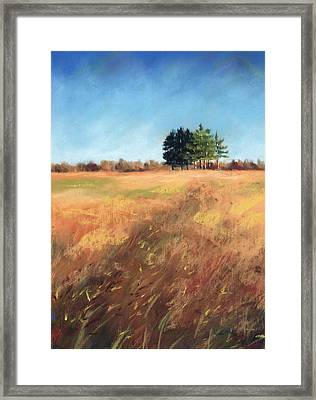 Swaying Amber Framed Print by Christine Camp