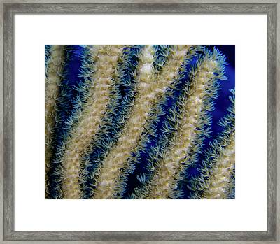 Swaying Coral Polyps Framed Print by Jean Noren