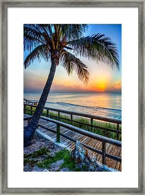 Swaying Palms Framed Print by Debra and Dave Vanderlaan