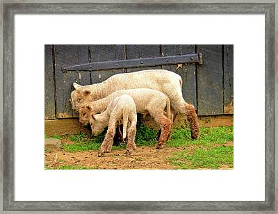 Sweaters Small Medium And Large Framed Print by Geraldine Scull