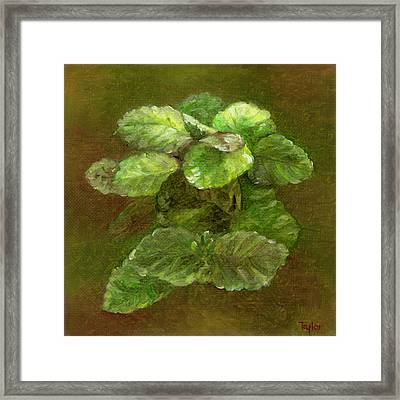 Swedish Ivy Framed Print