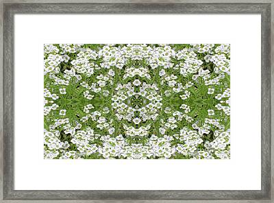 Framed Print featuring the digital art Sweet Alyssum Abstract by Linda Phelps