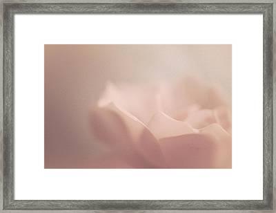 Sweet Angel Rose Framed Print