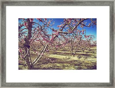 Framed Print featuring the photograph Sweet As Sugar by Laurie Search