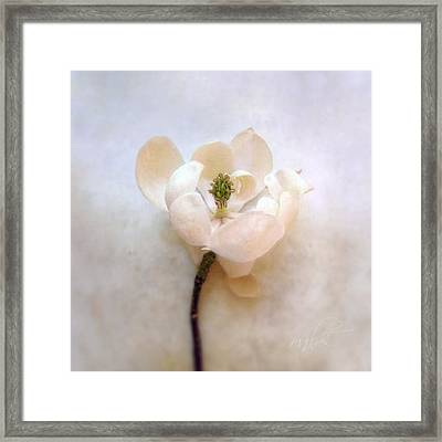 Sweet Bay Magnolia Bloom Framed Print