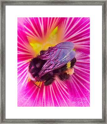Sweet Bee Framed Print by JoAnn SkyWatcher