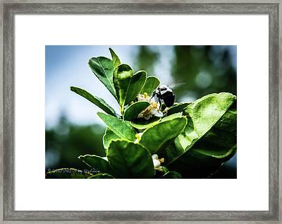 Sweet Bee Framed Print by Stefanie Silva