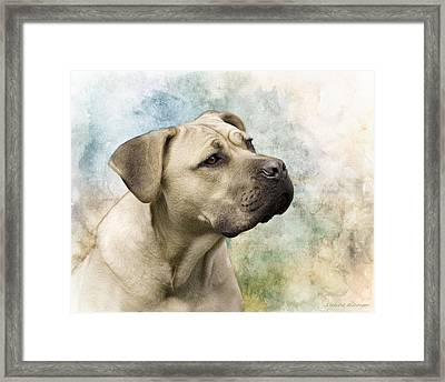 Sweet Cane Corso, Italian Mastiff Dog Portrait Framed Print