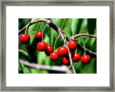 Sweet Cherry Pie Framed Print by Robert Pearson
