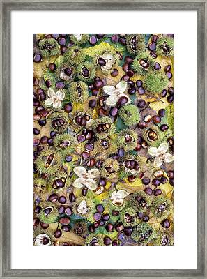 Sweet Chestnuts Framed Print by Tim Gainey
