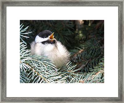 Framed Print featuring the photograph Sweet Chickadee by Angie Rea