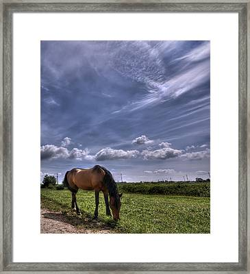 Sweet Country Scents Framed Print by Evelina Kremsdorf