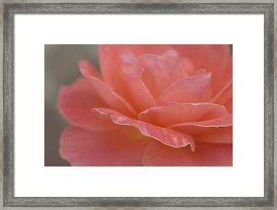 Sweet Delicacy Framed Print by The Art Of Marilyn Ridoutt-Greene