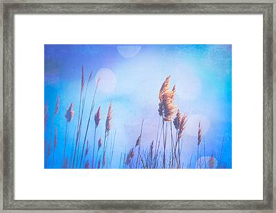 Sweet Dreams Framed Print by Colleen Kammerer